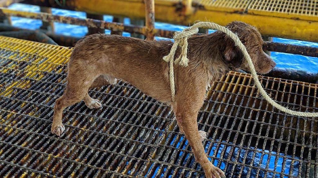 Seekor Anjing di Thailand Dievakuasi Usai Terombang-ambing di Laut