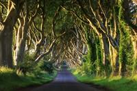Dark Hedges di Irlandia Utara tampak menyeramkan sekaligus eksotis. Jalanan dengan pepohonan di kanan kirinya ini muncul sebagai Kingsroad (iStock)