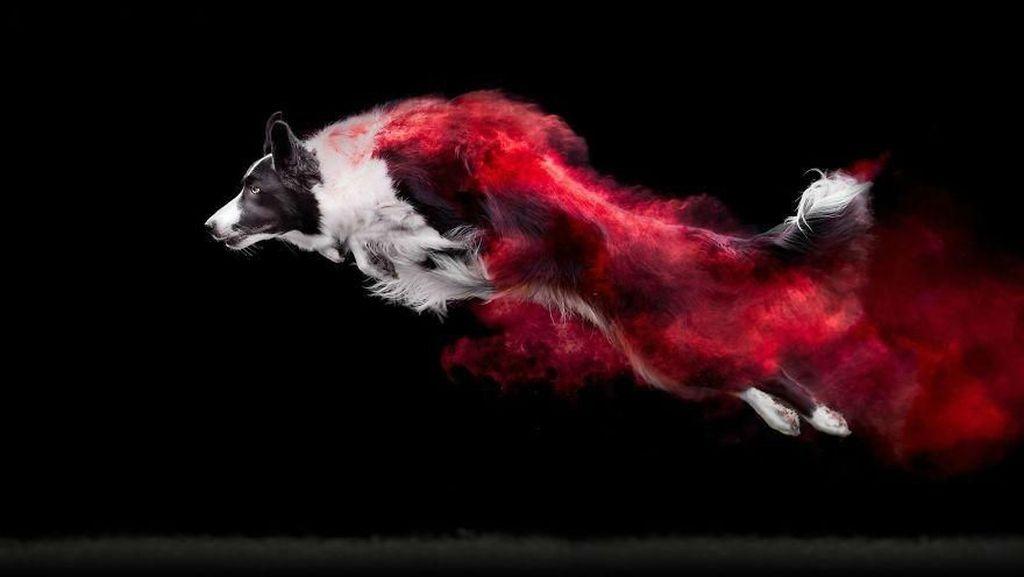 Cantiknya Powder Photography pada Anjing