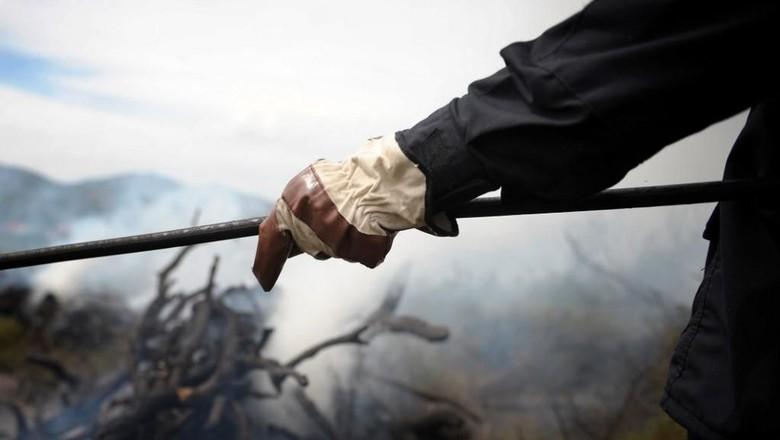 Pesta Barbeku hingga Picu Kebakaran Hutan, 2 Mahasiswa Didenda Rp 420 M