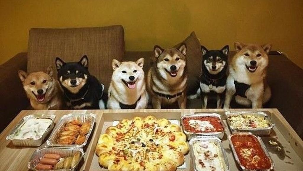 Bikin Gemas! Shiba Inu yang Berfoto Hingga Jualan Makanan