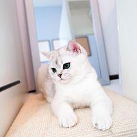 Gemas! Aksi Kucing ASMR Saat Makan dan Minum di Depan Microphone
