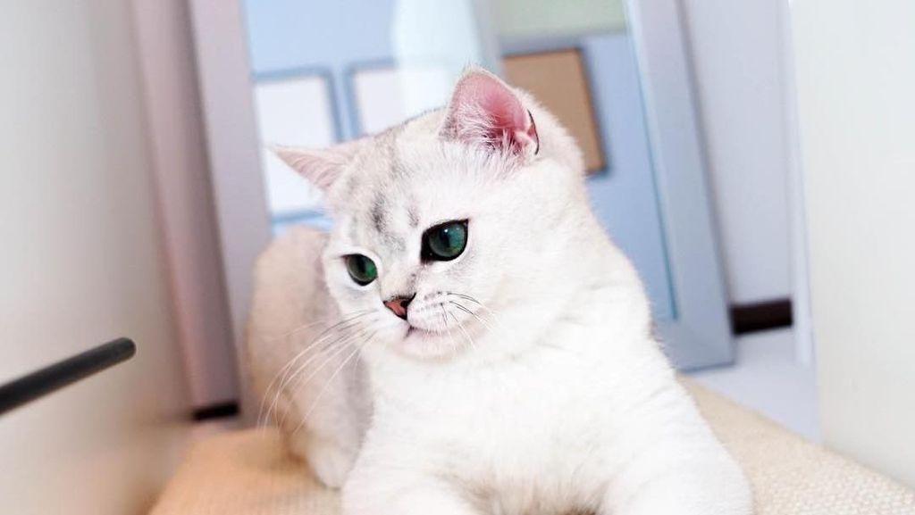 Wisata Unik di Bandung untuk Pencinta Kucing dan Anjing