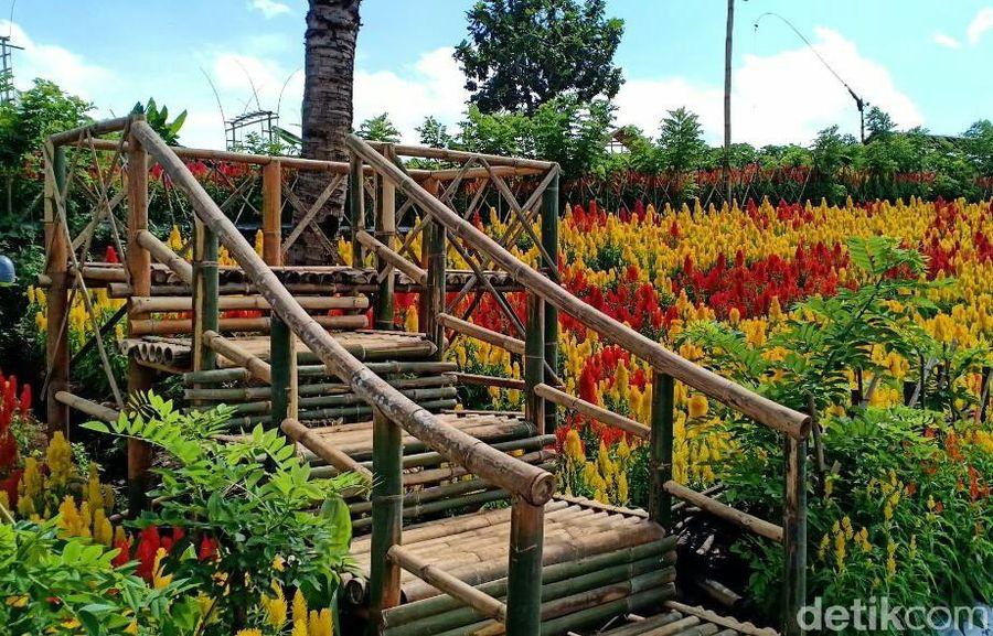 Ini ada di Banyuwangi. Lahan seluas 10 hektar yang berada di lereng Ijen ini disulap menjadi kebun berbagai tanaman yang hasil pertanian asli Banyuwangi. (Ardian Fanani/detikcom)