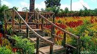 Cerita dari Banyuwangi, Dulu Tanah Tandus Kini Indah Berwarna-warni