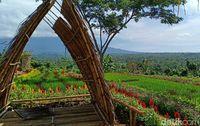 Cerita dari Banyuwangi, Dulu Tanah Tandus Kini Indah Berwarna-warmi