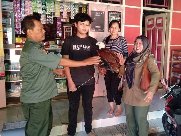 Warga menyerahkan seekor elang bondol kepada petugas Resor KSDA Pangandaran. (Foto: istimewa)