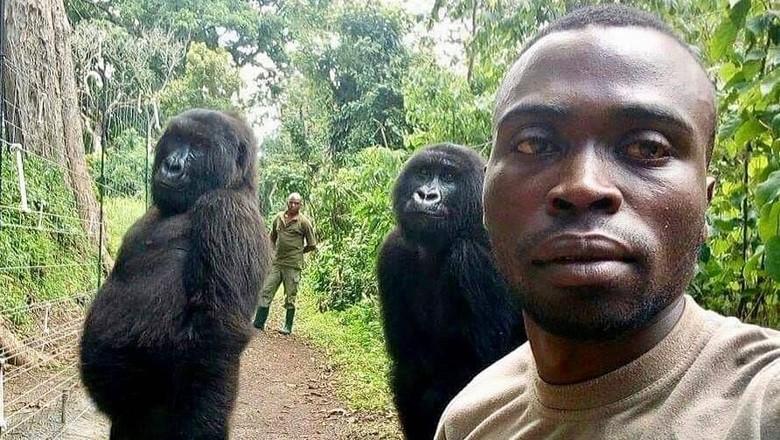 Dua gorila betina berpose saat selfie bersama penjaga Taman Nasional Virunga (Virunga National Park/Instagram)