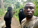 Genit! 2 Gorila di Kongo Sadar Kamera Selfie Bareng Penjaga Taman