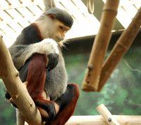 Makan Otak Monyet yang Terancam Punah, Tiga Pria Ini Masuk Penjara