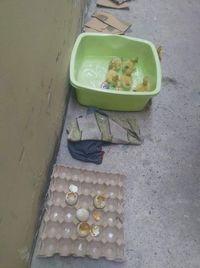 Wanita Ini Beli 24 Telur untuk Dimakan, Malah Berakhir Menetaskannya Jadi Bebek!