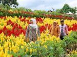 Khofifah Terpesona Destinasi Agrowisata Instagramable di Banyuwangi