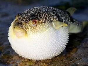 Harus Tajir Kalau Mau Cicip 8 Seafood Termahal di Dunia