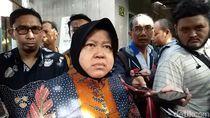 Banyak Petugas KPPS Meninggal, Risma: Tidak Kuat Jangan Dipaksakan