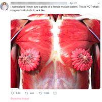 Begini model kelenjar susu pada payudara wanita. (Foto: Tangkapan layar Twitter)