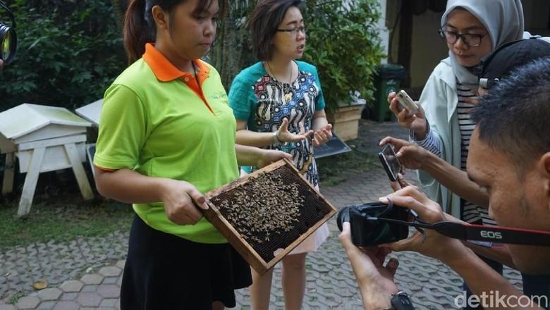 Peternakan Big Bee Farm (Shinta/detikcom)