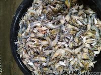 Catat! Ini Seafood yang Selalu Ada di Pasar Ikan Modern Muara Baru