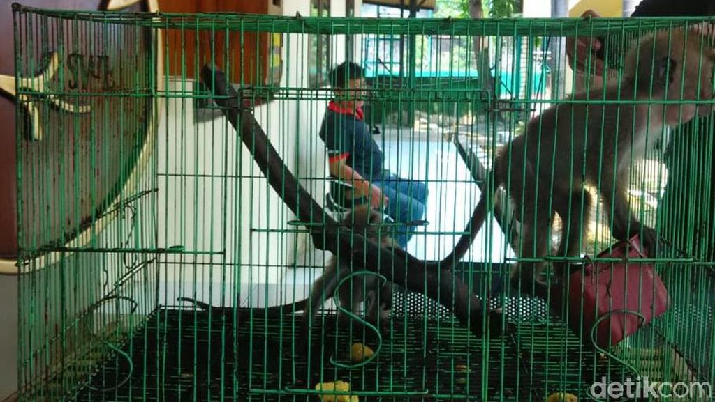 Jual Satwa Langka, Sopir Lintas Provinsi Ditangkap Polisi