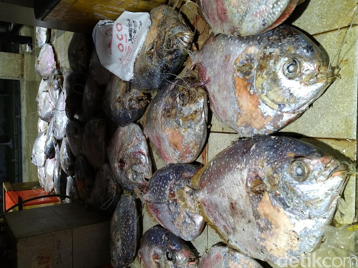 Aneka ikan laut tersaji setiap hari di Pasar Ikan Modern ini. Ratusan penjual ikan menawarkan ikan segar hasil tangkapan nelayan Indonesia. Foto: Devi S. Lestari/detikfood
