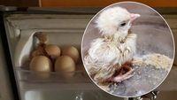 Ini 5 Kisah Telur yang Disimpan dan Tiba-Tiba Menetas