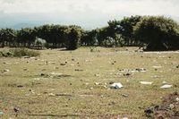 Setelah Festival Pesona Tambora, Savana Cantik Ini Penuh Sampah