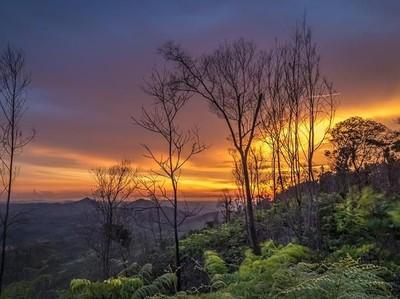 Berburu Foto di Gunung Mandiangin Tahura