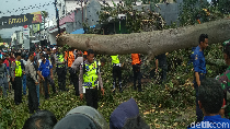 Bruk, Pohon Tumbang Tewaskan Tukang Ojek di Garut