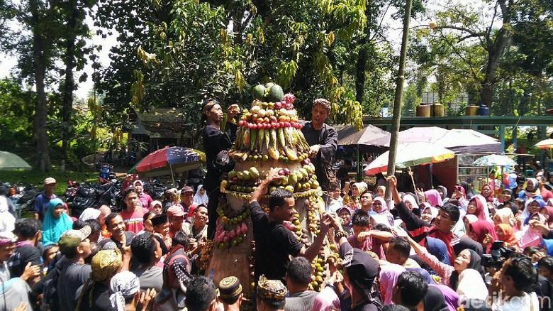 Rebutan buah di upacara adat Ngikis di Ciamis (Dadang Hermansyah/detikcom)