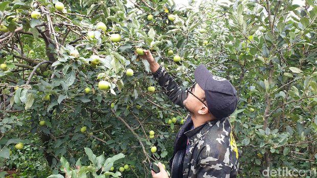 Wisata Petik Apel Agro Rakyat