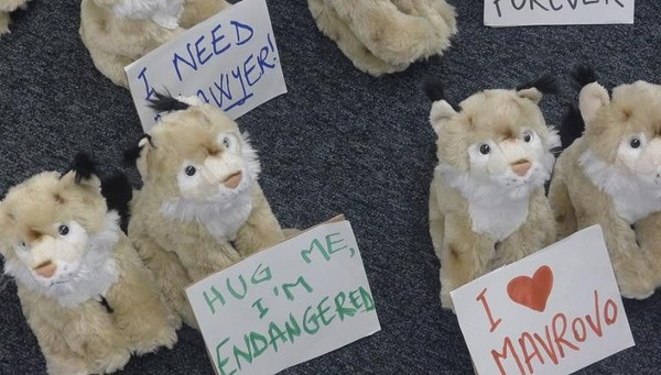 Ana Colovic Lesoska menghabiskan 7 tahun berkampanye melindunginya. Pada sebuah konferensi EBRD di Warsawa, dia membagikan mainan Lynx lucu dengan tulisan, Peluk aku, aku hampir punah. (CNN Travel)