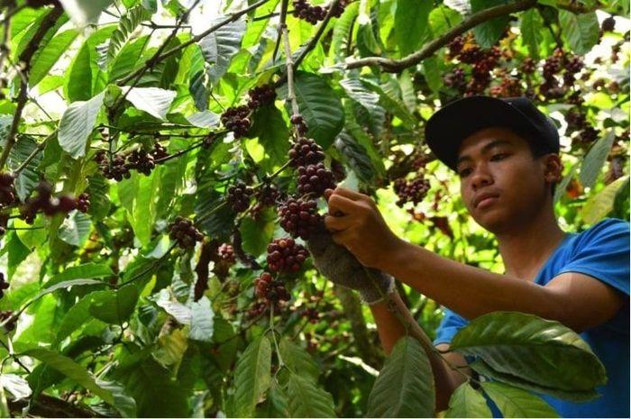Dusun Kopi Sirap-Gunung Kelir (Foto: dok. BCA)