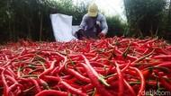 Harga Cabai Merah dan Bawang Putih Sumbang Inflasi Terbesar Mei