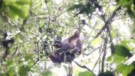 My Trip My Adventure: Bertualang Bareng Orangutan di Kutai Timur