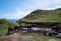 Jika terus menelusuri hingga puncak tertinggi, traveler bisa bertemu kawanan kerbau yang sedang mandi lumpur di kubangan. (Syanti/detikcom)