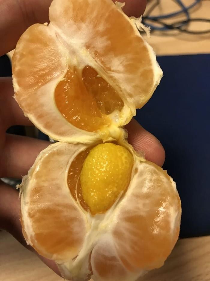 Buah jeruk ini sekilas terlihat biasa. Tapi di bagian dalamnya, terdapat buah melon kecil yang baru tumbuh. Foto: Istimewa