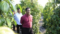 Mentan Lepas Ekspor 30 Ton Lada Asal Belitung