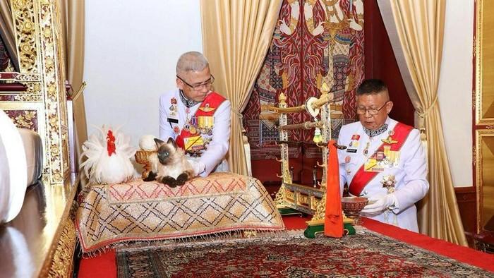 Raja Thailand Maha Vajiralongkorn dan seekor kucing siam saat prosesi upacara penobatan. (Foto: The Committee on Public Relations of the Coronation of King Rama X via REUTERS)