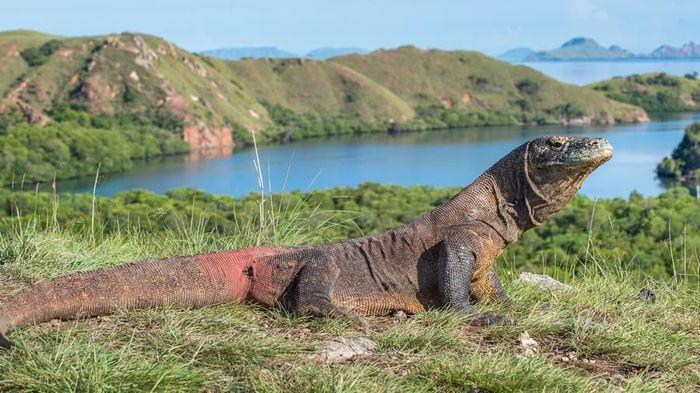 Kita Harus Ambil Peran untuk Menyalamatkan Pulau Komodo