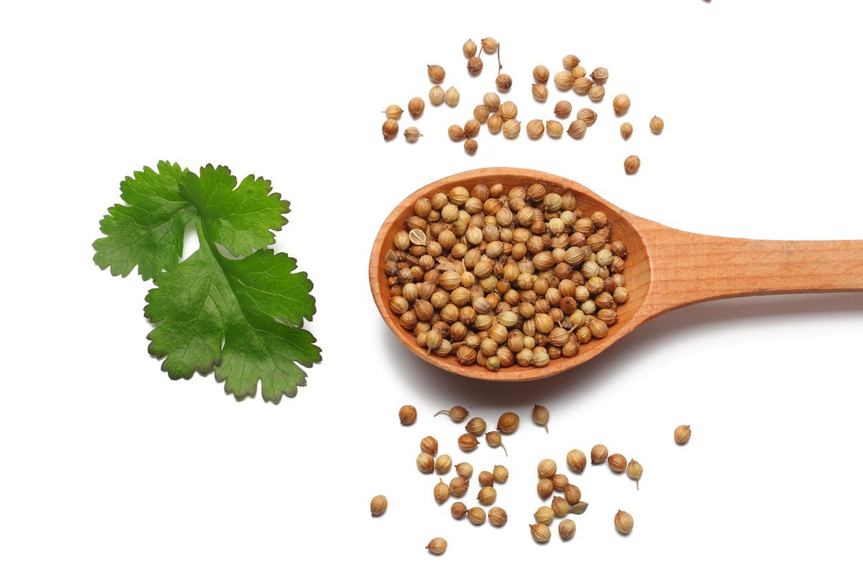 coriander seeds in wooden spoon isolated on white background top view