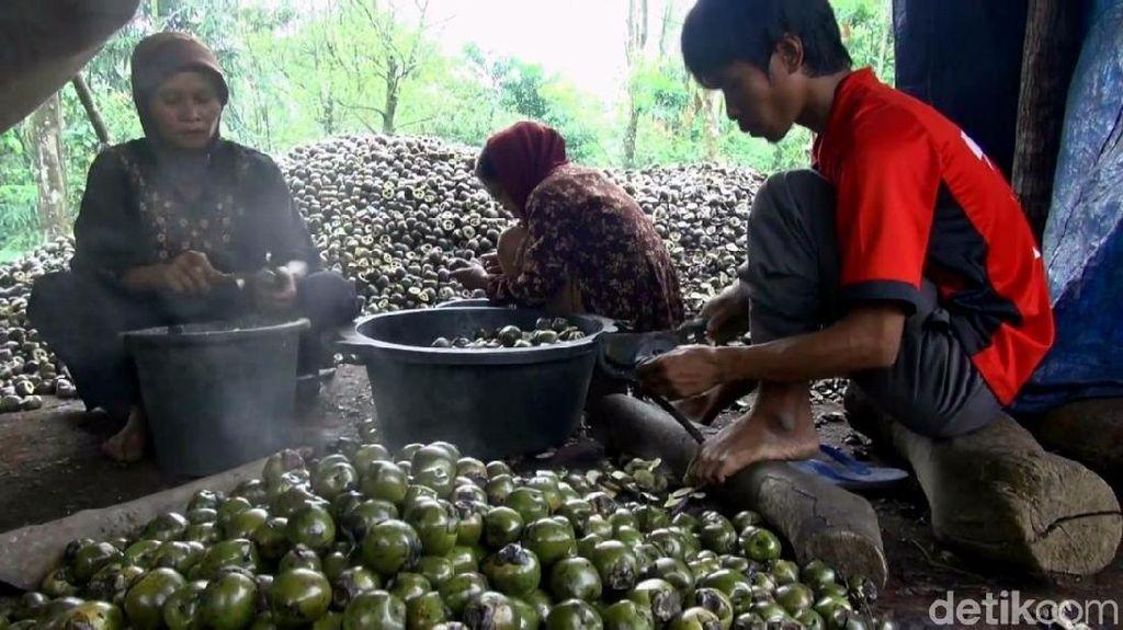 Berkah Bulan Ramadhan Bagi Petani Kolang-kaling