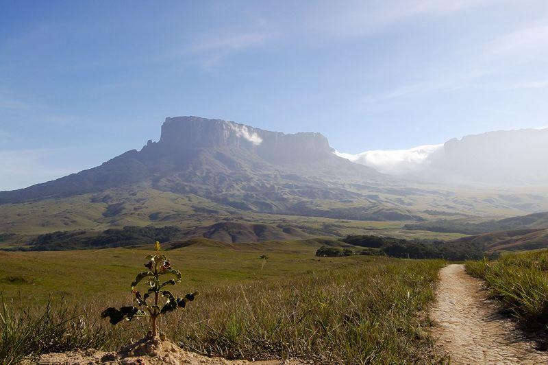 Mount Roraima, sebuah gunung batu di wilayah Venezuela yang dikelilingi tebing terjal serta memiliki puncak berupa dataran (iStock)