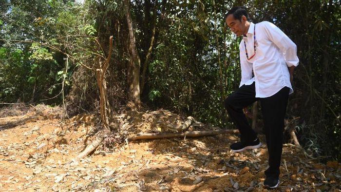 Presiden Jokowi cek calon lokasi ibu kota baru/Foto: Antara Foto/Akbar Nugroho Gumay