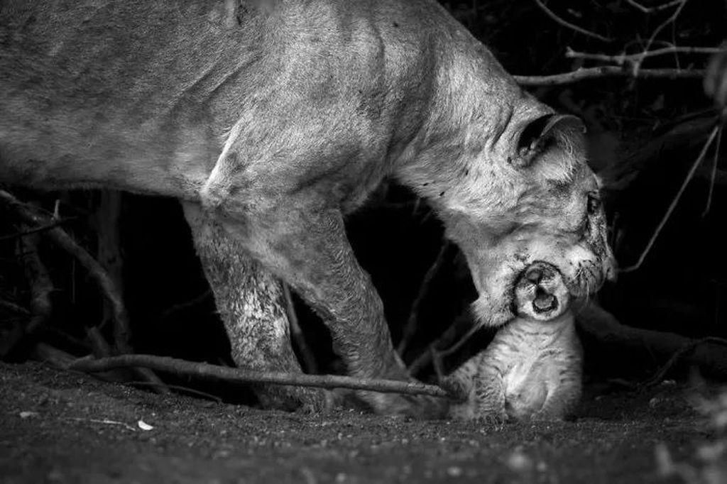 Karya Sonalini Khetrapal. Foto:National Geographic