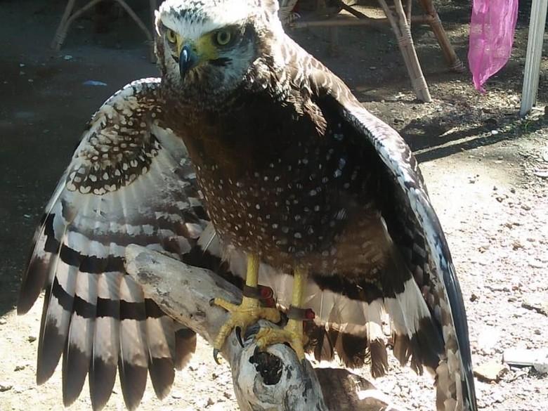BKSDA Yogyakarta Mulai Lakukan Pelepasliaran Burung-burung Langka