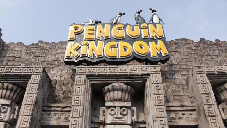 Penguin Kingdom di Ancol (dok Ancol)