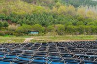 Mengapa Korea Selatan Disebut Negeri Ginseng?