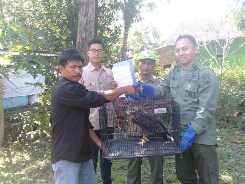 Warga Majalengka Selamatkan Elang-Ular Bido ke BBKSDA Jabar