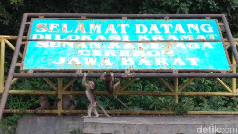 Monyet di Petilasan Sunan Kalijaga Cirebon (Sudirman Wamad/detikcom)