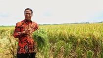 Terdampak Banjir, Lahan Pertanian Berasuransi di Sulsel Diganti 100%