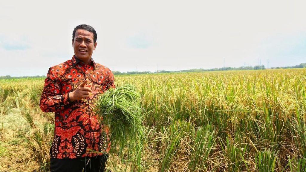 Sektor Pertanian Dorong Pertumbuhan Ekonomi RI
